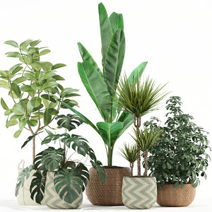plants 116 3D model