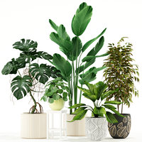 plants 117 3D