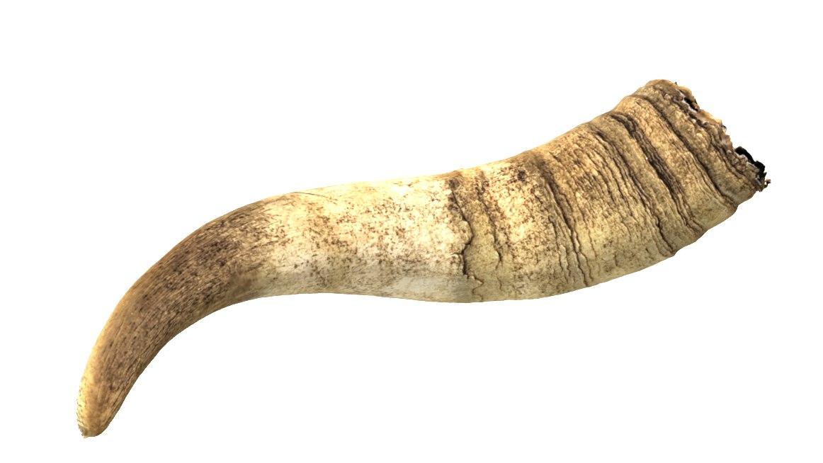 horn ram model