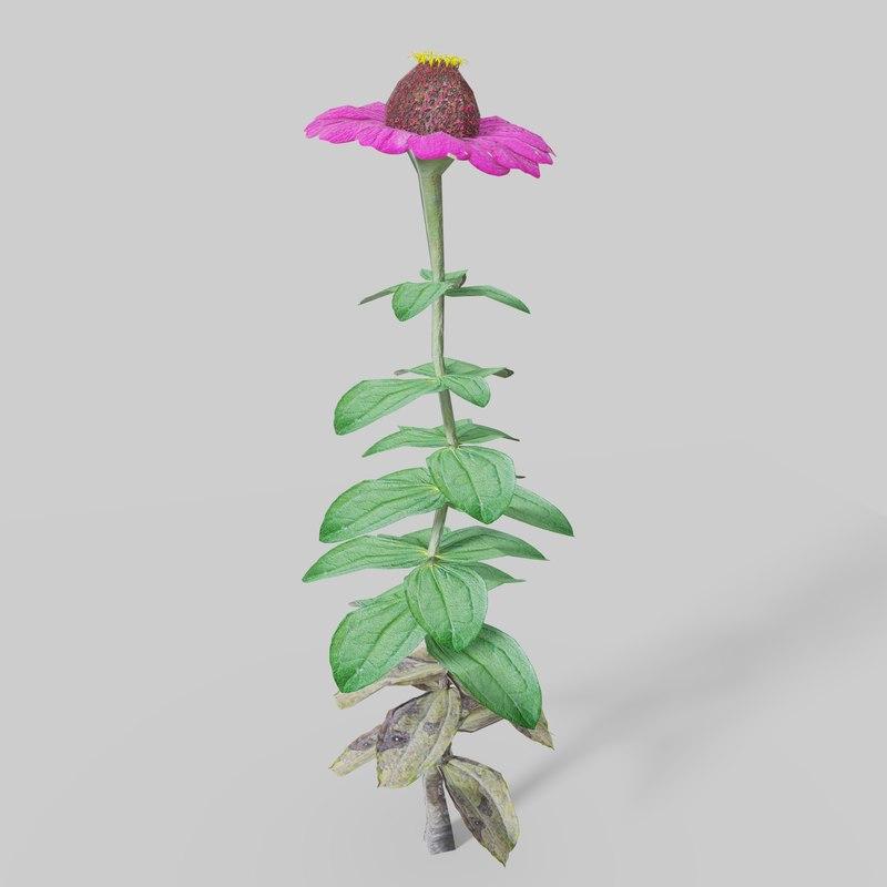 zinnia flower model