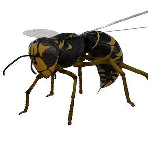 3D wasp rigged