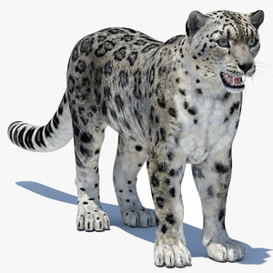 snow leopard 2 model