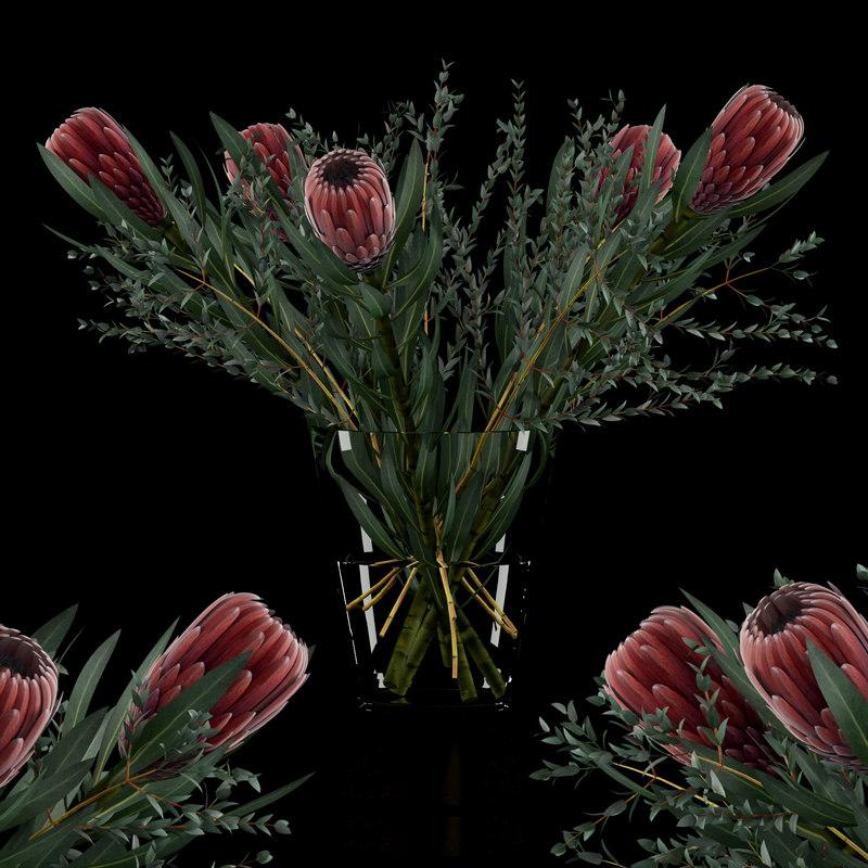 proteas eucalyptus parvifolia 3D model