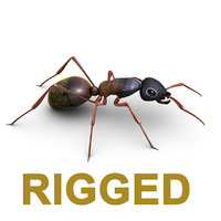 ant rig animation 3D