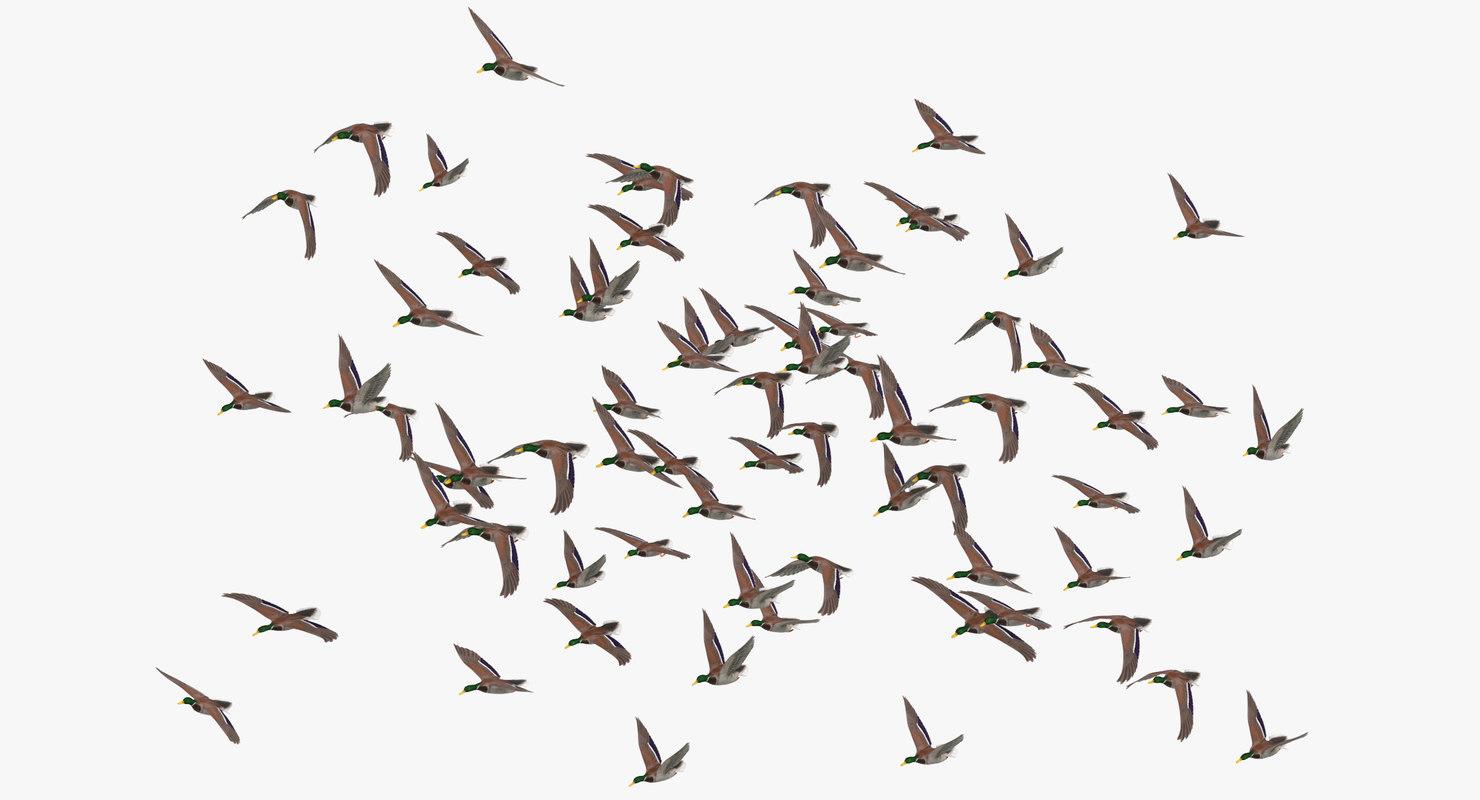 large flock ducks flying 3D model