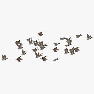 medium flock ducks flying 3D