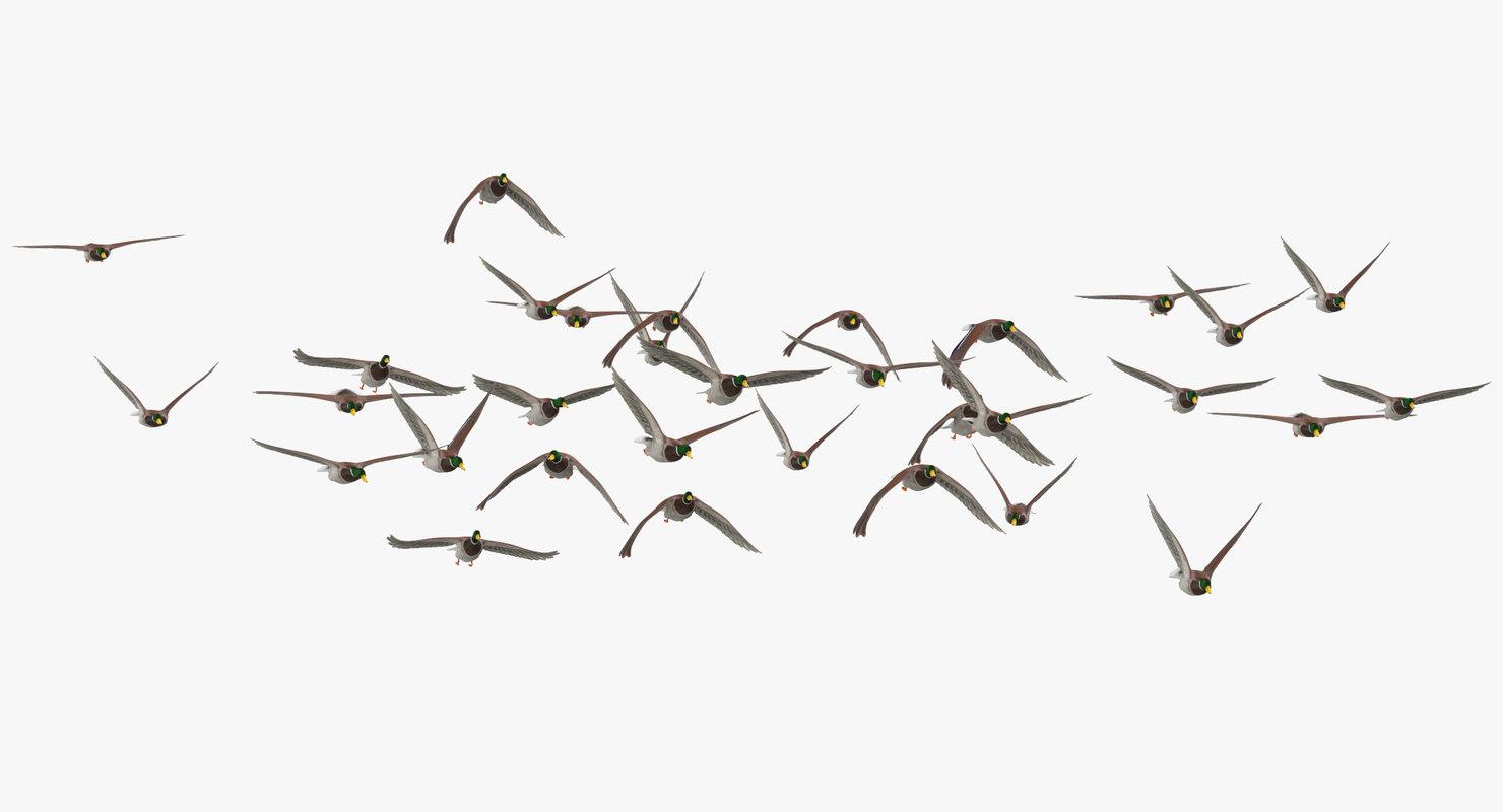 medium flock ducks flying 3D model
