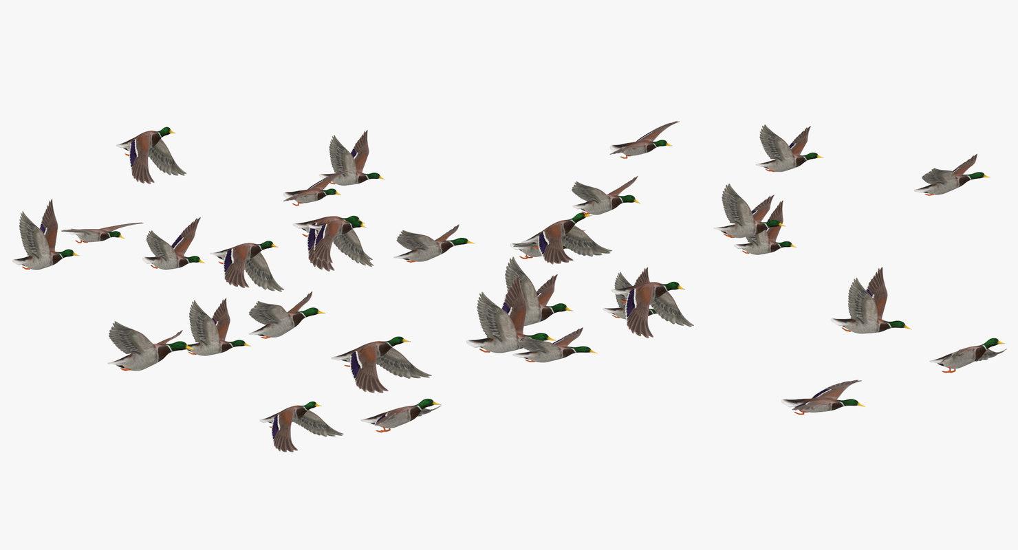 medium flock ducks flying model