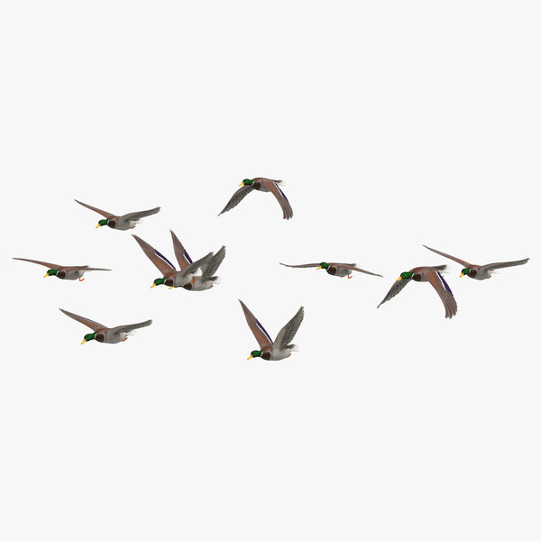 small flock ducks flying 3D model