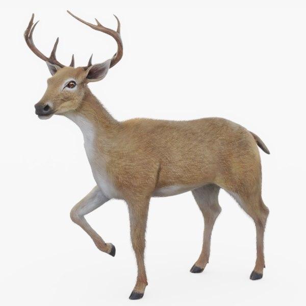 3D rigged deer