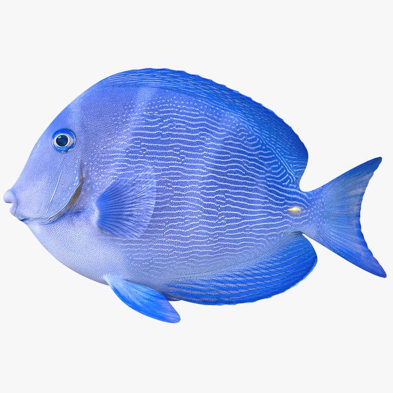 doctorfish doctor fish 3D model