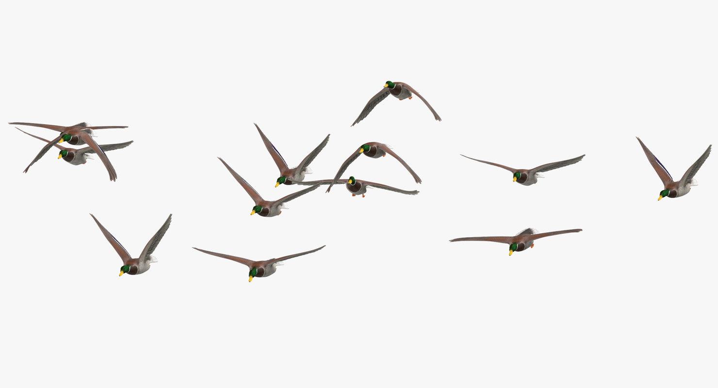 3D small flock ducks flying