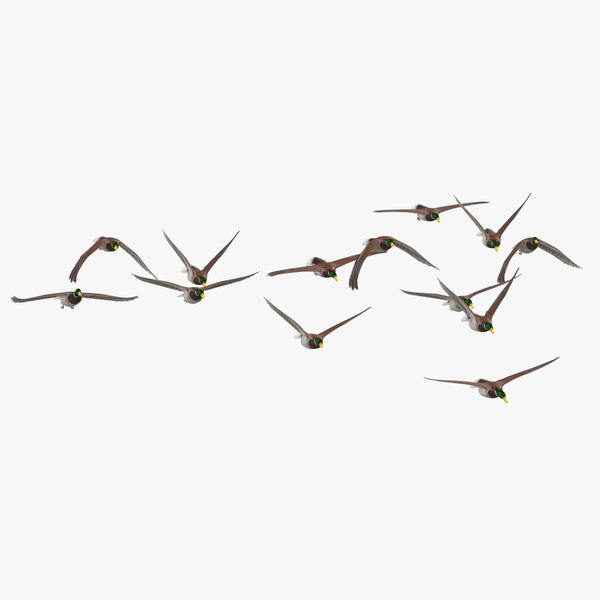 3D small flock ducks flying model