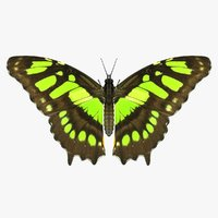 realistic malachite butterfly 3D