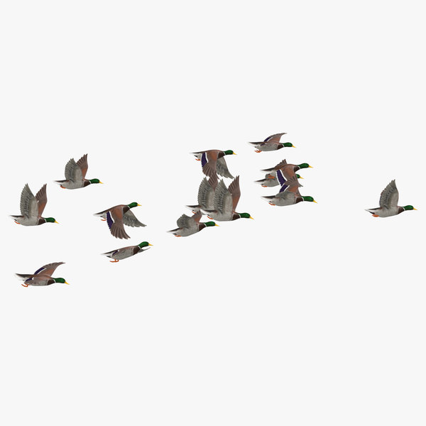 3D small flock ducks flying