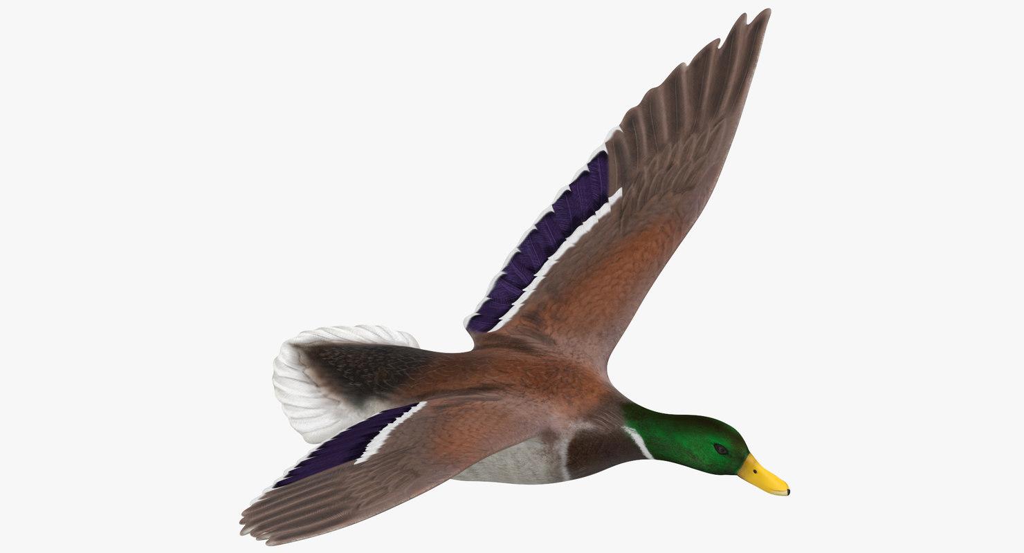 flying duck model