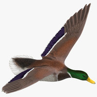 flying duck model