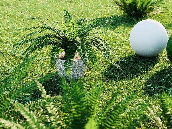 sword ferns model