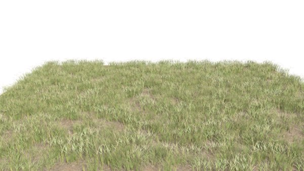 grass realistic 3D model
