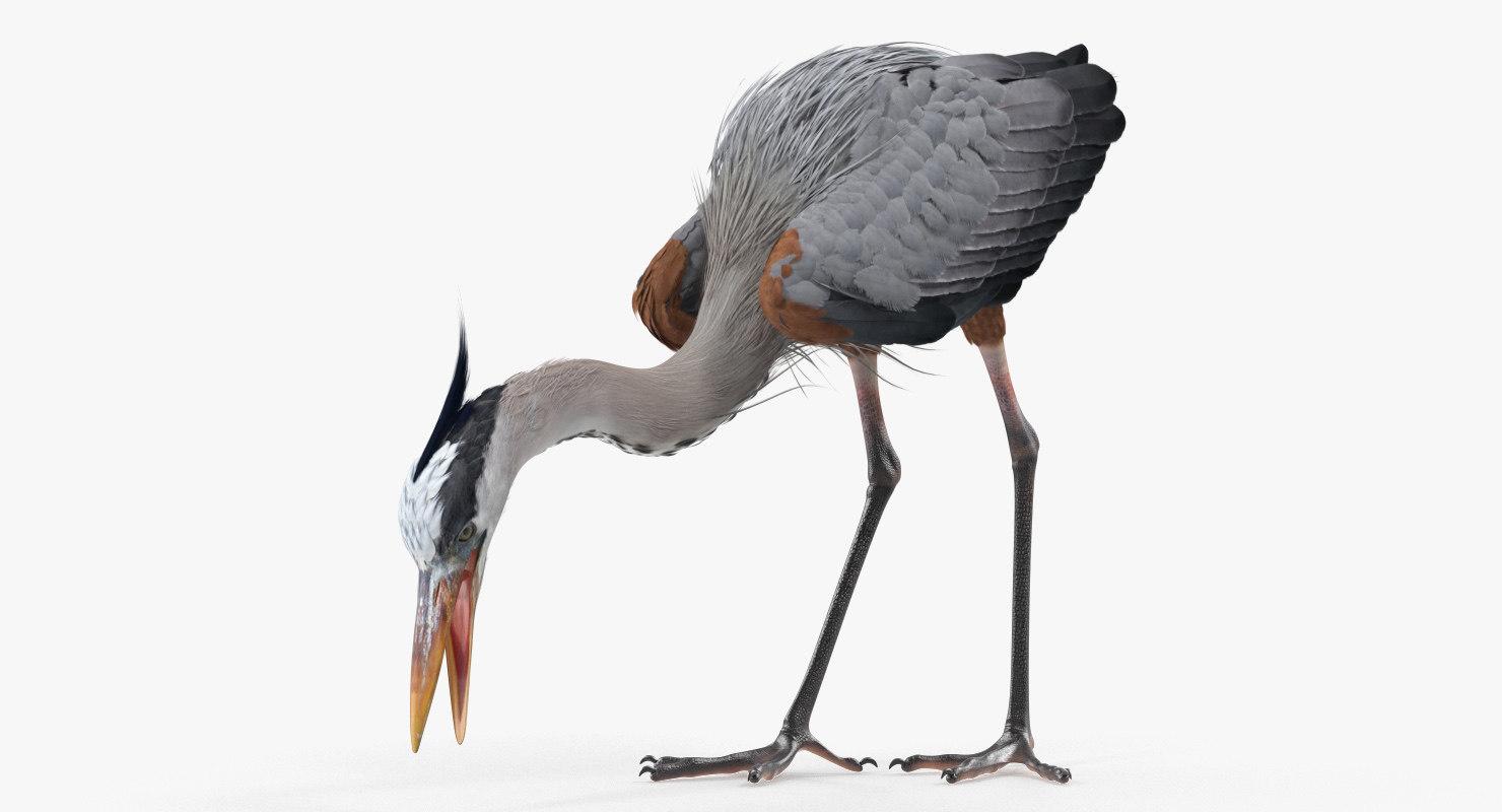 great blue heron eating 3D model