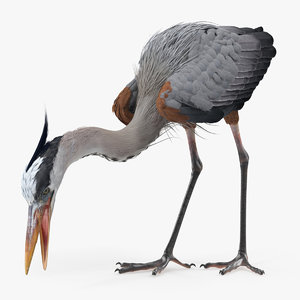 great blue heron eating 3D model