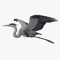 3D model great blue heron flight