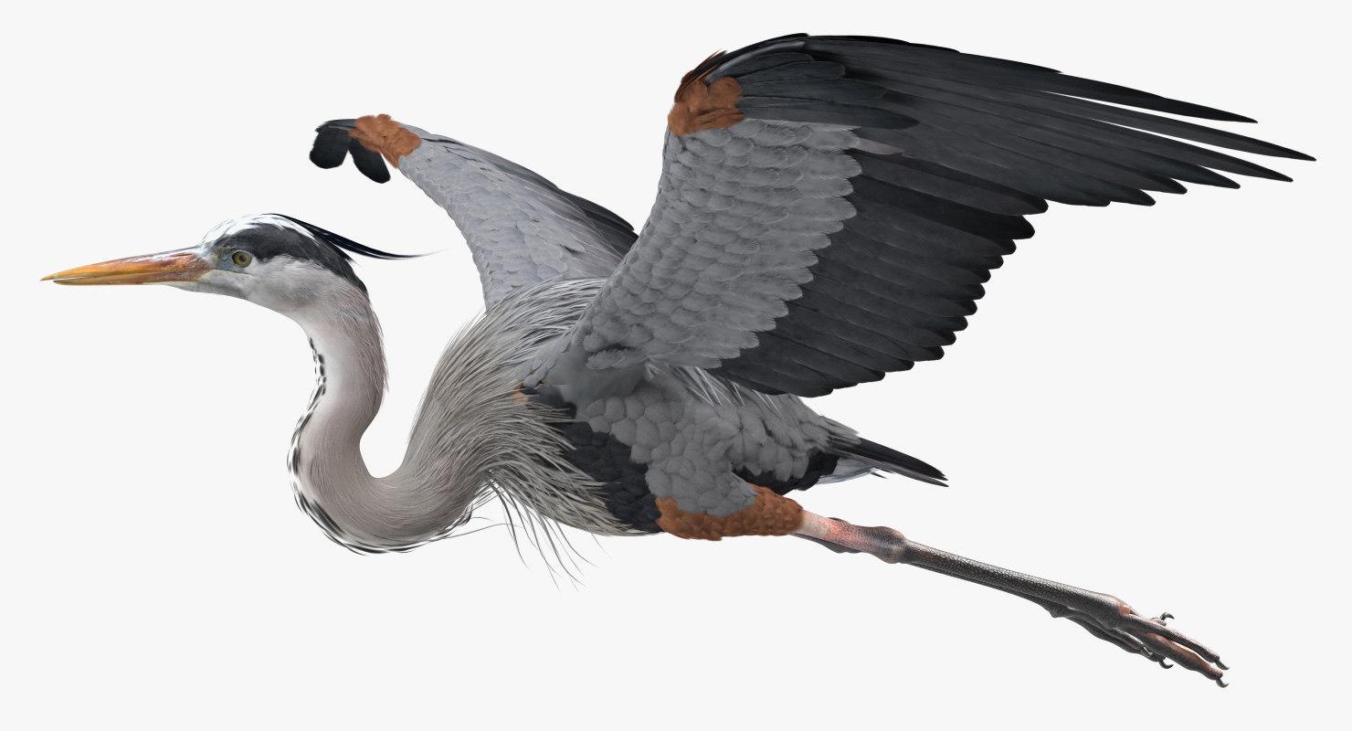 3D model great blue heron flight