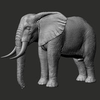african elephant realistic zbrush 3D model