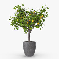 lemon tree 3D