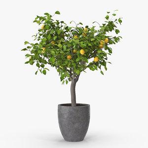 lemon tree 3D