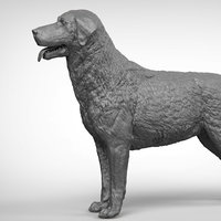 labrador ztl zbrush model