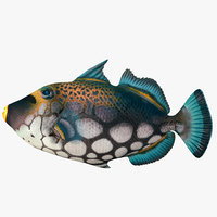 clown triggerfish 3D