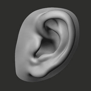 3D ear realistic perfect
