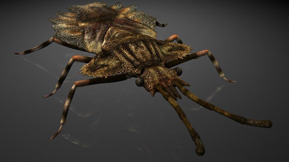 insectshemipterainfraorder pentatomomorphaaradidae 3D model