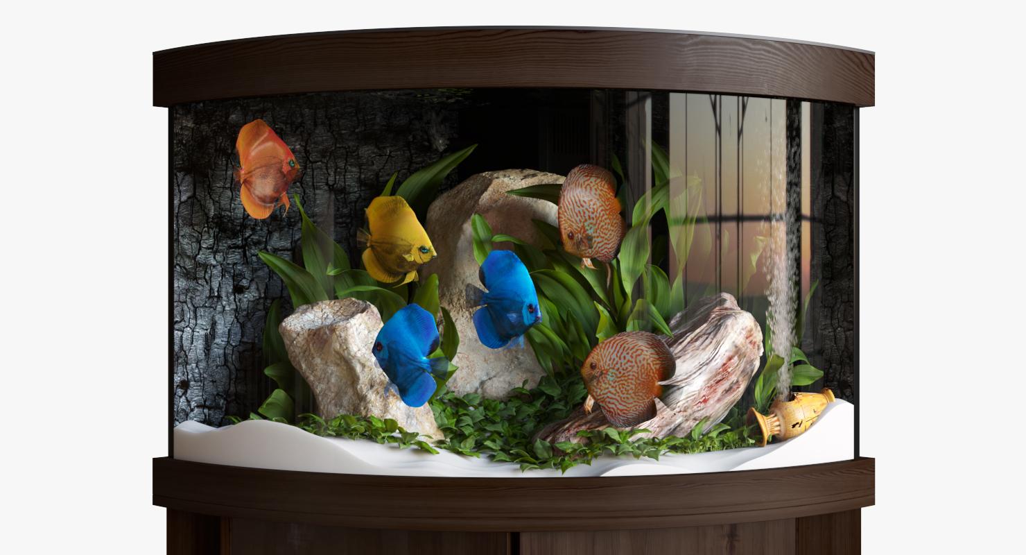 3D aquarium discus fish model