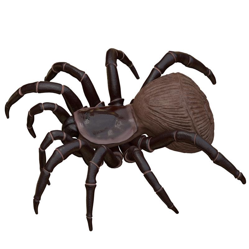hourglass spider 3D model