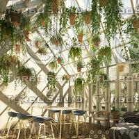 hanging plants 3