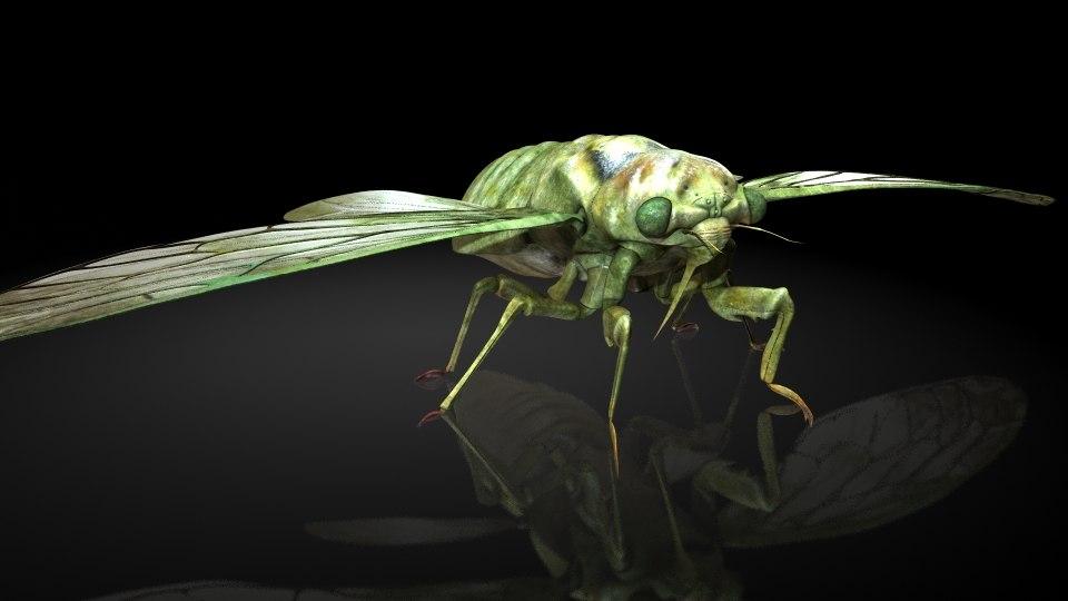 cicada 3D