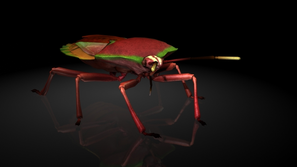 3D stink bug insects model