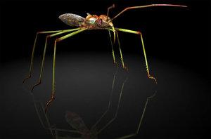 assassin bugs reduviidae 3D model