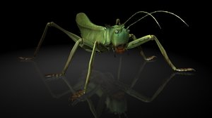 3D cricket insects