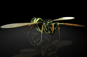 wasp bee insects 3D model