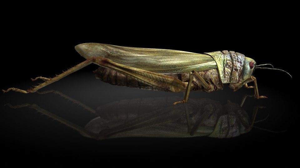 locusts model