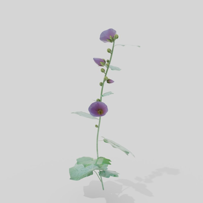 hollyhocks plants alcea 3D