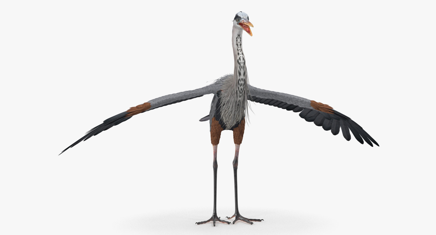 great blue heron 3D