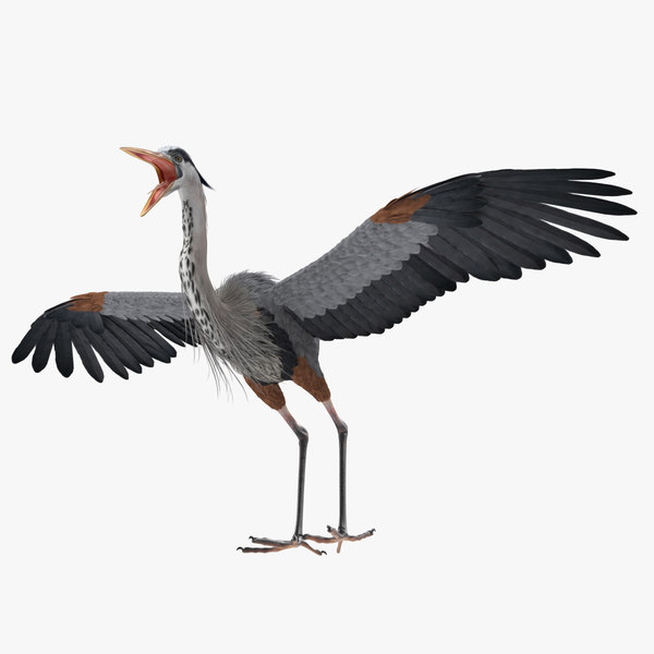 3D great blue heron rigged model