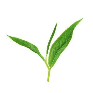 tea leaves sprig 3D