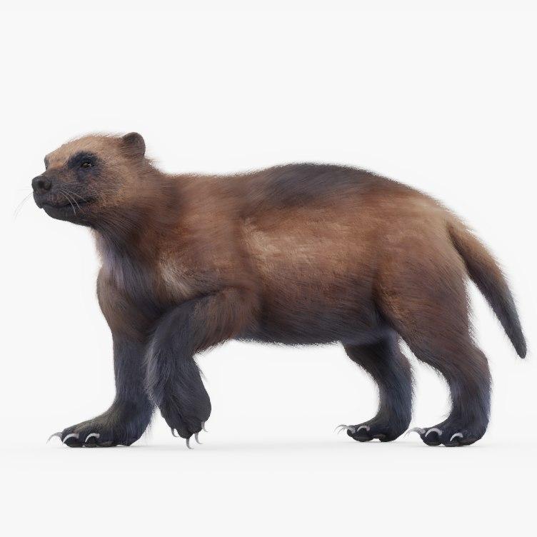 animals mammals fauna 3D model