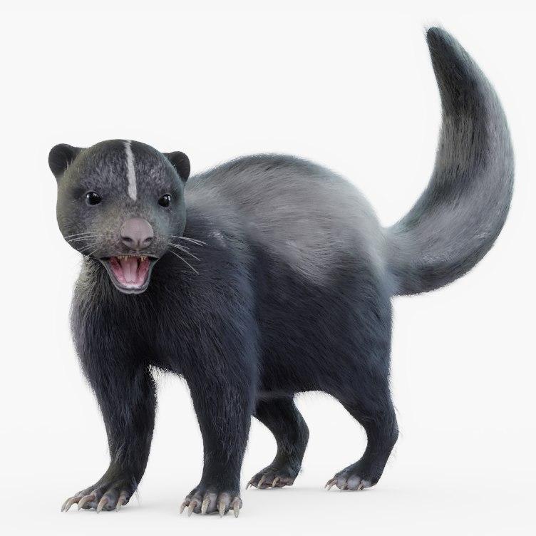 3D skunk rigged model