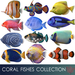 coral fishes 3D model